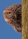 Аватар пользователя Oracle727
